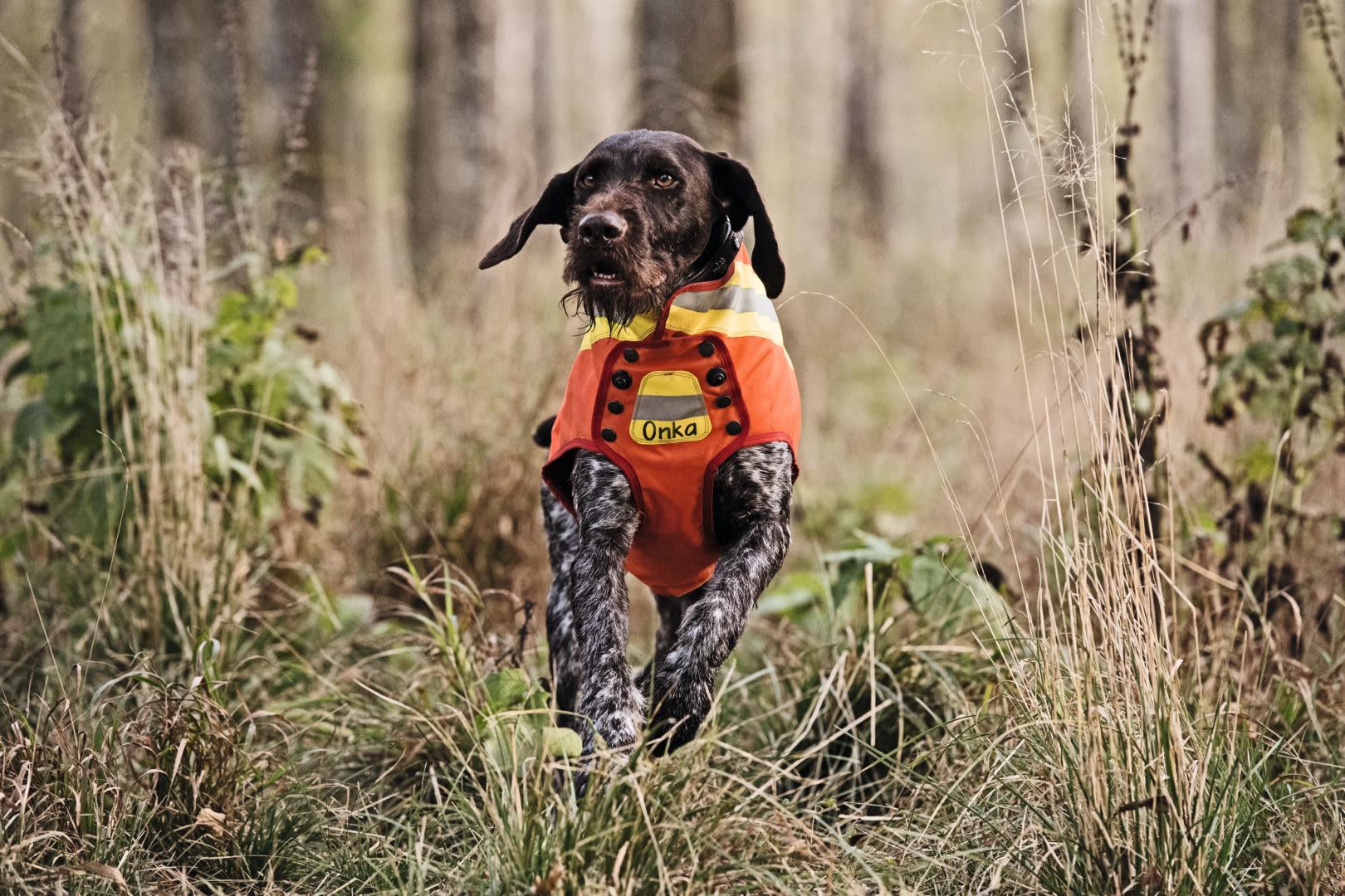 Z8i 0,75-6x20 dog in orange clothing