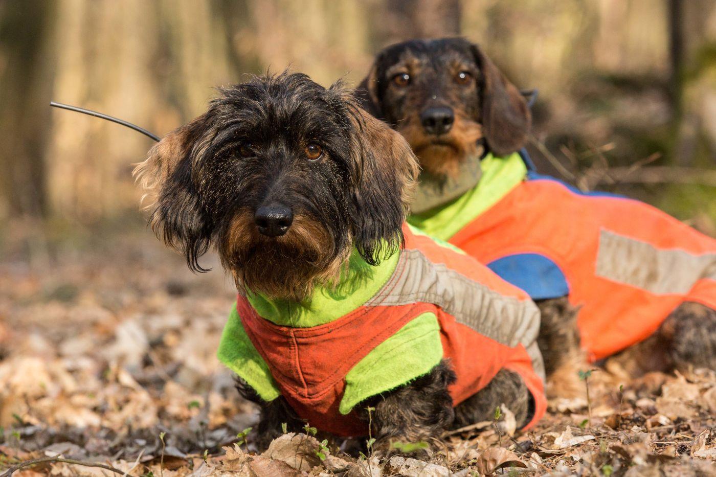 Alena Steinbach dogs