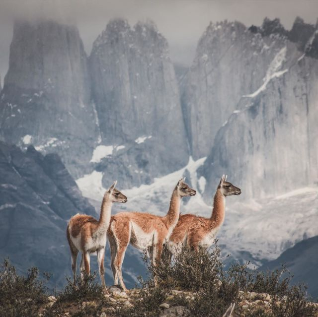 The Chile Tourist Board, in partnership with long-range and high-quality optic specialists SWAROVSKI OPTIK and UK tour operator Hayes&Jarvis, has launched a Day and Night campaign from 11th January to 7th March to drive awareness of Chile as a world-class visual and adventure tourism destination.