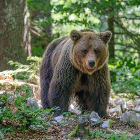 !!! Andreas Hütten Entering the bears' realm O/ - Andreas Hütten - DSC02061-Bearbeitet