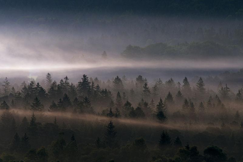 AFL - SOC Lead Blogpost - Hero Image Fog Wood