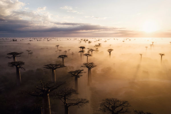 In the beginning there was the light. Light is essential for the survival of humans, animals, and plants in Africa.