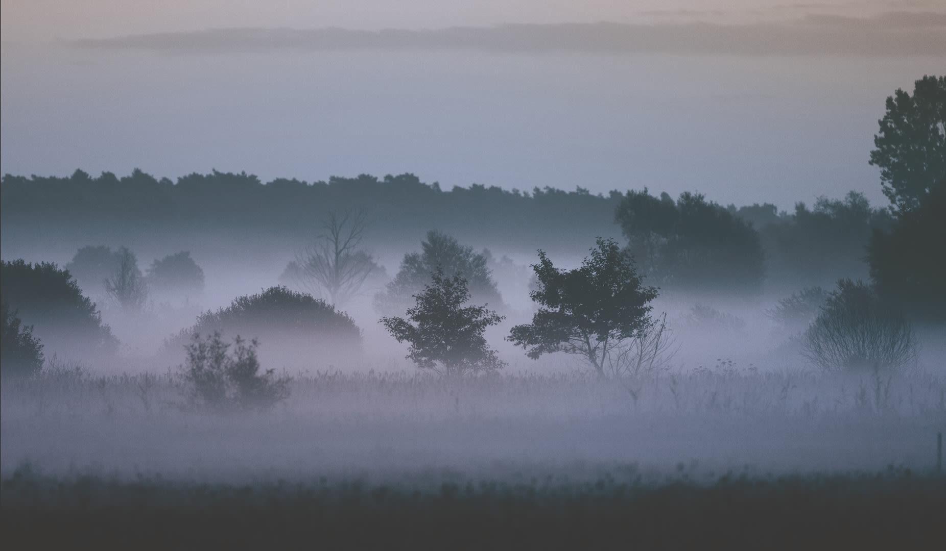 K09 wiese baumen nebel V2