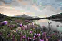 Serene river landscape in northern Canada