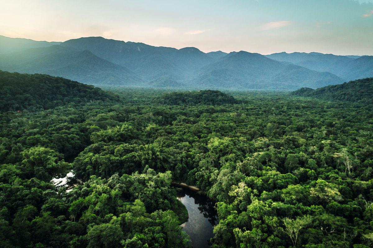 An Island of Biodiversity ID1399395