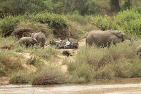 Close Encounters with Elephants