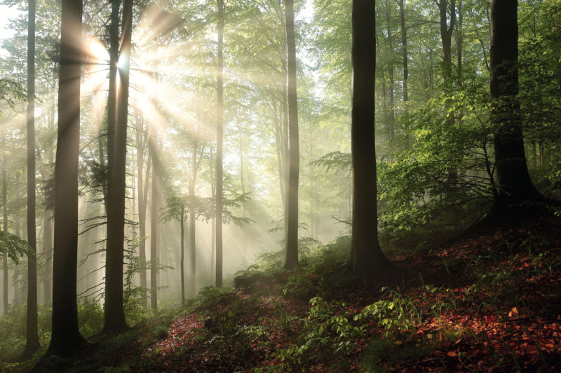 HUNTING IN PRIMEVAL FORESTS - Wood Poland