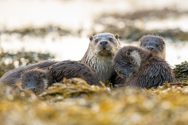 """An """"otter-ly"""" amazing day  - Last but not least: Keep at it and enjoy being close to wildlife by Brydon  Thomason"""