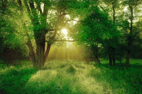 Landscape, forrest, morning sun, sunrise ID:1504275