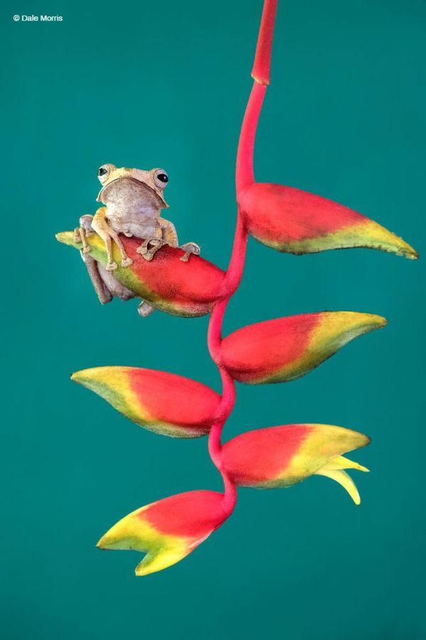 Frog Borneo