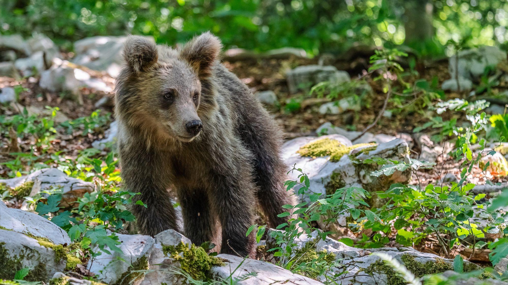!!! Andreas Hütten Entering the bears' realm O/ - Andreas Hütten - bear cub