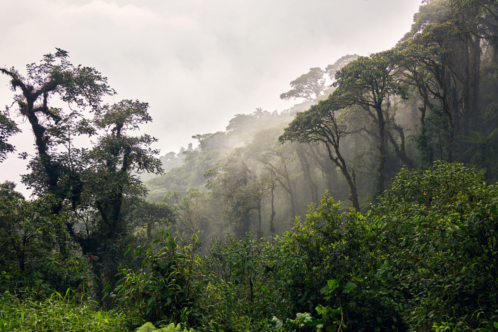 Ecuador Rain Forest 1576037