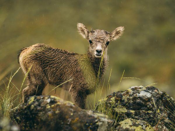 !!! Charles Post baby mammal