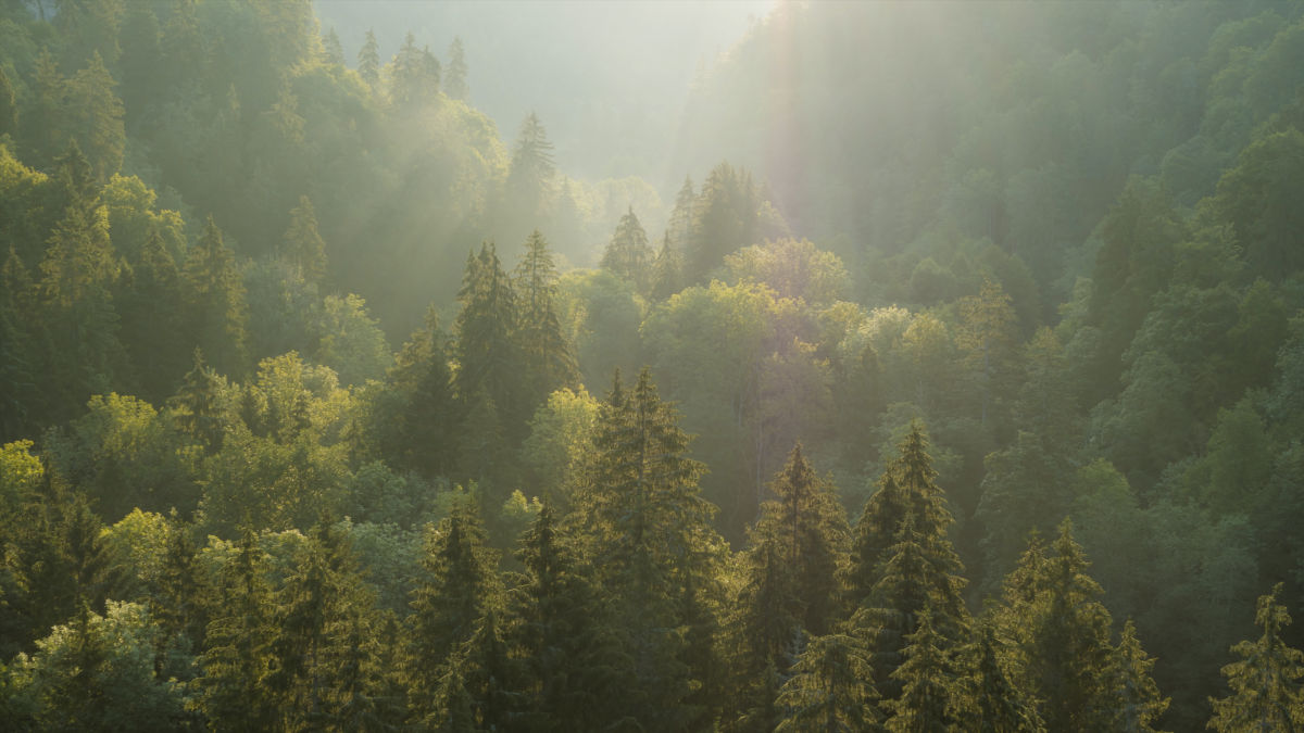 Landscape mixed forest from above