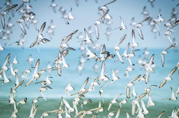 Birds Biodiversity GettyImages-641662754 RGB