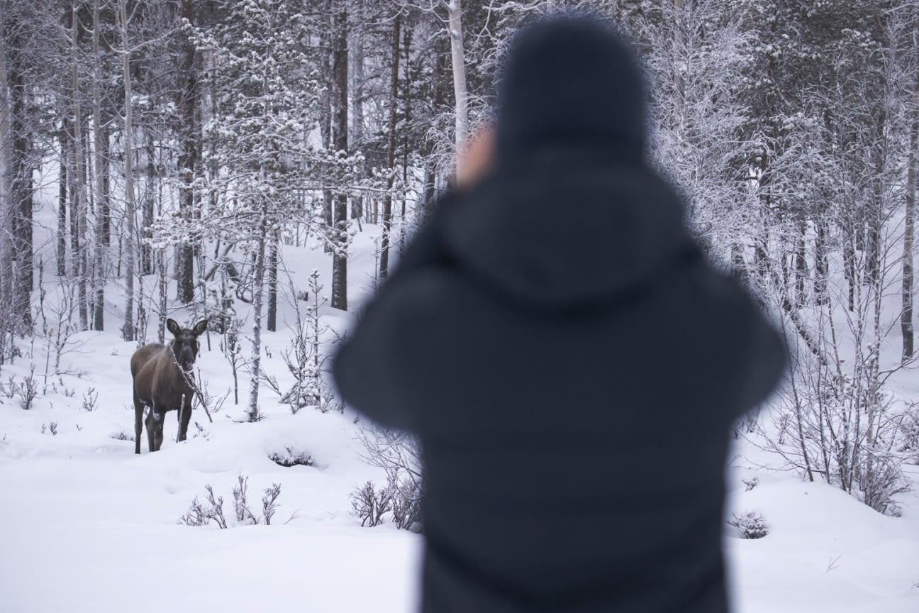 Simon Green Swedish Lapland