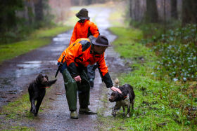 Join  us on a driven hunt in Belgium - Dimitri Hullebroek beaters with dogs