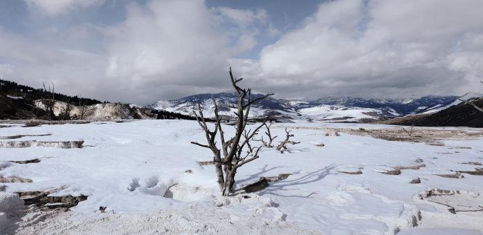 Yellowstone Ravens US, Matthias Lorettto