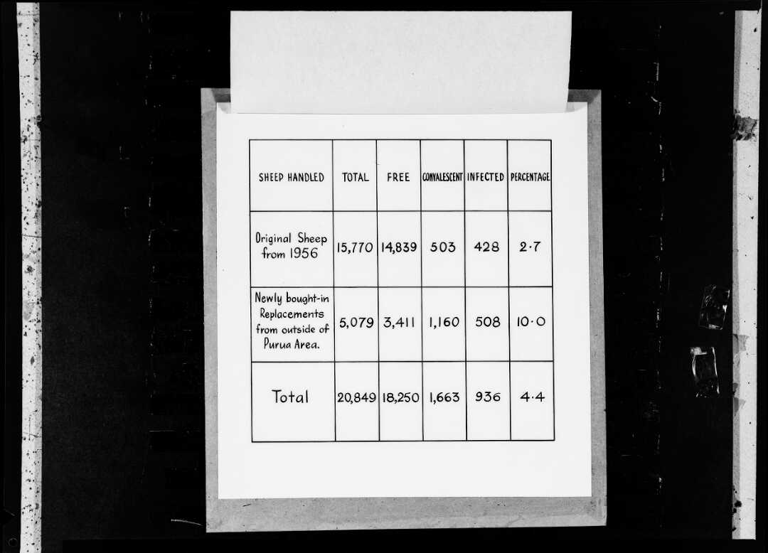 Sheep shearing data, photographed by K E Niven and Co of Wellington.