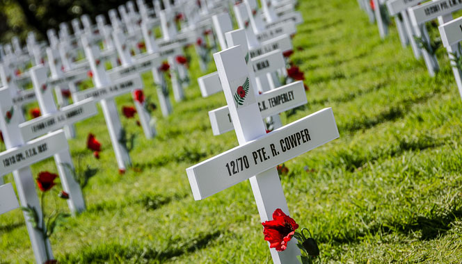 ANZAC crosses in a field with poppies.