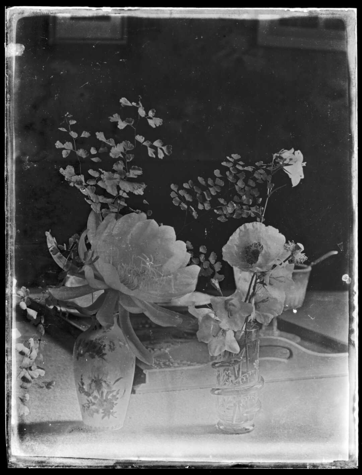 A dry plate glass negative showing two vases with cut flowers.
