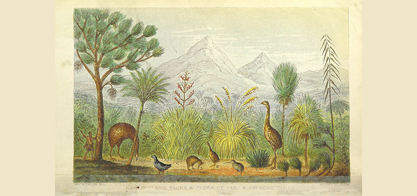 Drawing of an early NZ scene showing a Māori with a spear stalking birds in amongst NZ fauna with mountains in the backdrop