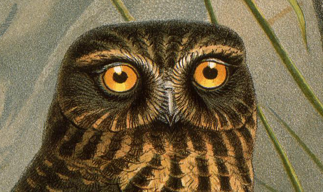 A big old owl face.