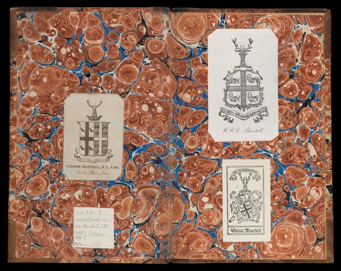 Decorated inner papers, including pasted-in collector plates.
