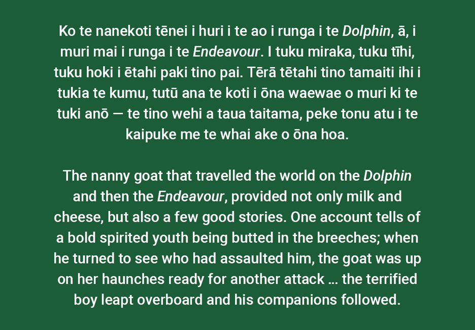 The nanny goat that travelled the world on the *Dolphin* and then the *Endeavour*, provided not only milk and cheese, but also a few good stories. One account tells of a bold spirited youth being butted in the breeches; when he turned to see who had assaulted him, the goat was up on her haunches ready for another attack … the terrified boy leapt overboard and his companions followed.  [The Endeavours goat](/files/schools/hm54-the-endeavours-goat-english.mp3)