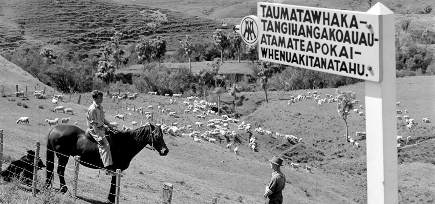 2 farmers, one on horse, in paddock with sheep behind signpost with NZ's longest place name