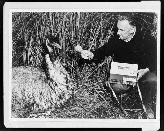Black and white photo of a man and an emu.