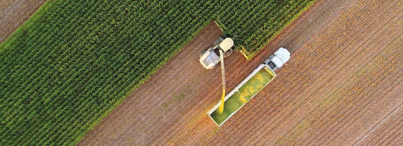 Green gas crops