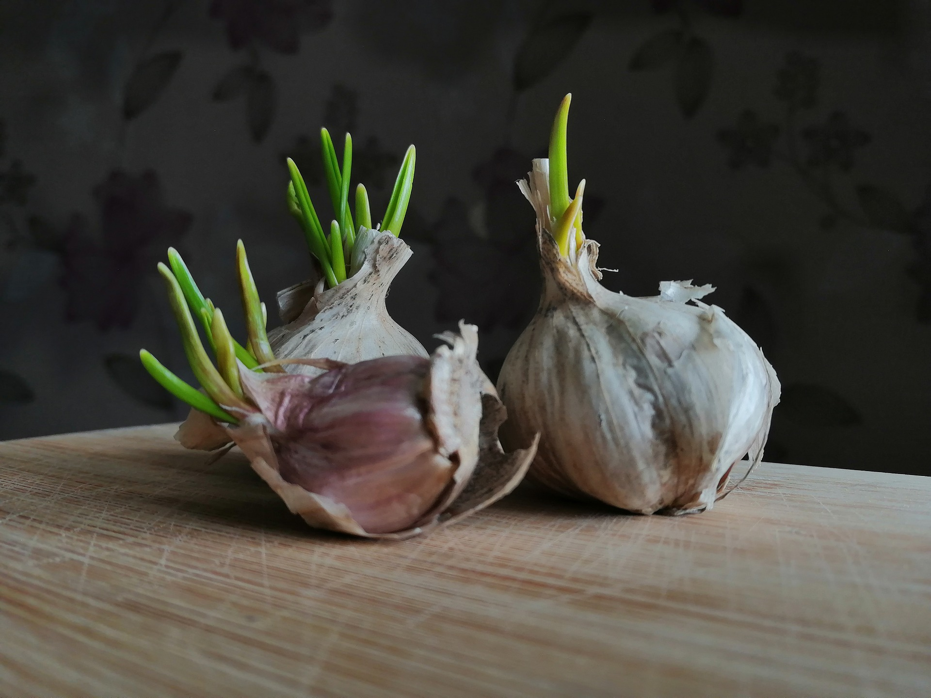How To Grow Garlic Sprouts Indoors