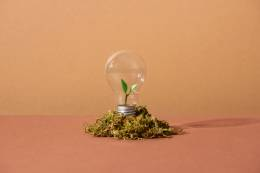 light bulb with plant leaves inside and planted on soil.
