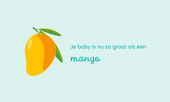 baby size of mango week 19
