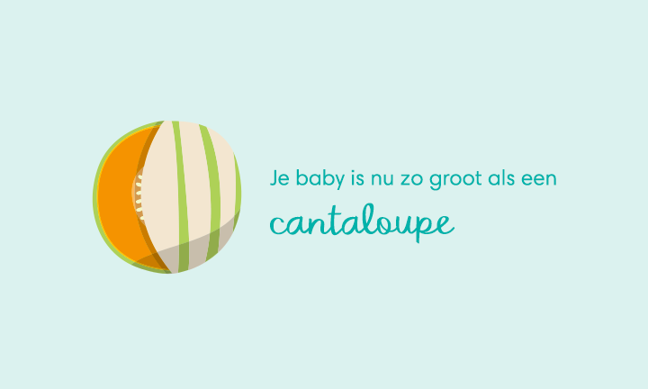 baby size of cantaloupe week 34