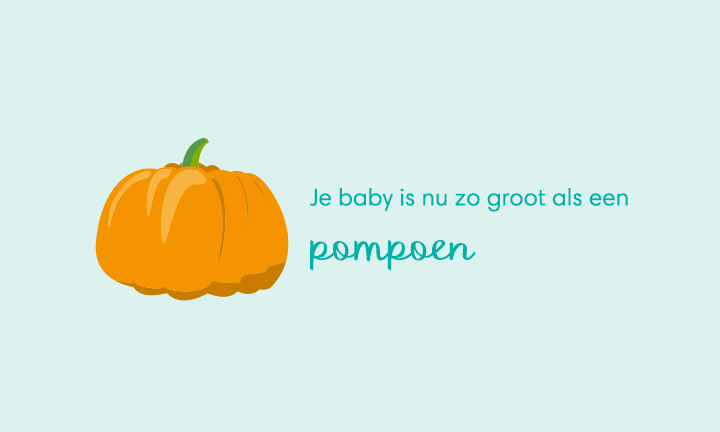 baby size of pumpkin week 40