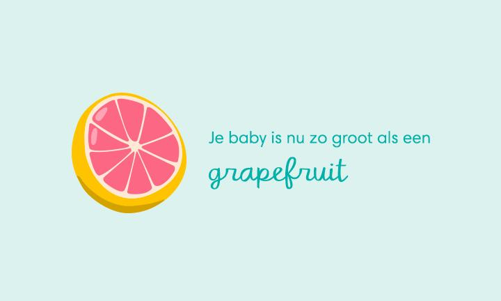baby size of grapefruit week 15