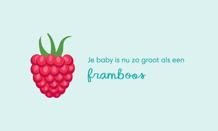baby size of raspberry week 8