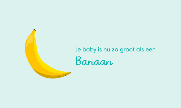 baby size of banana week 21