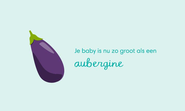 baby size of eggplant week 23