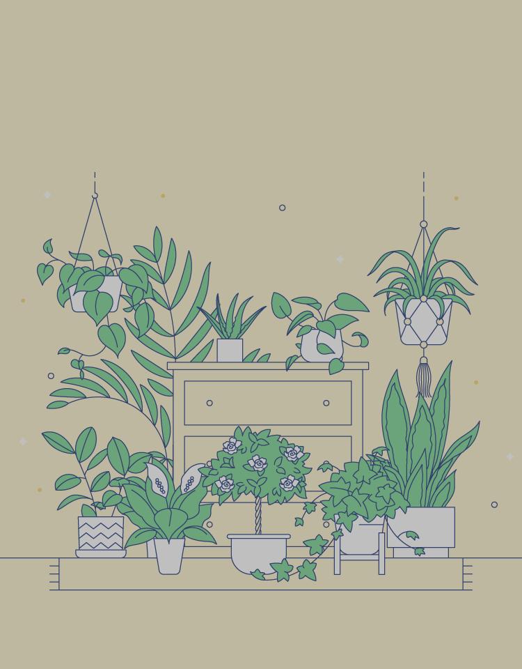 10 Plants You Should Keep In Your Bedroom Casper Casper