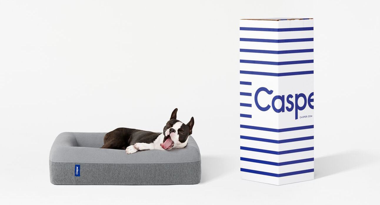a French Bulldog lounges happily in a Casper dog bed
