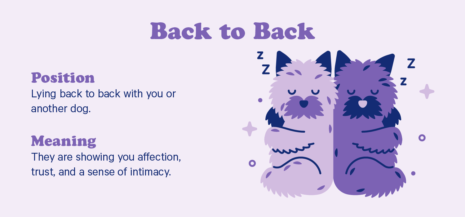 Two dogs sleep with their backs touching. Illustration.