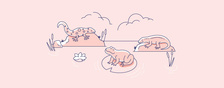 04 Frog, newt, salamander