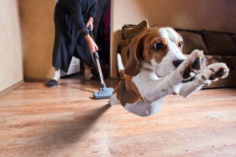 The Best Hoover for Pet Hair