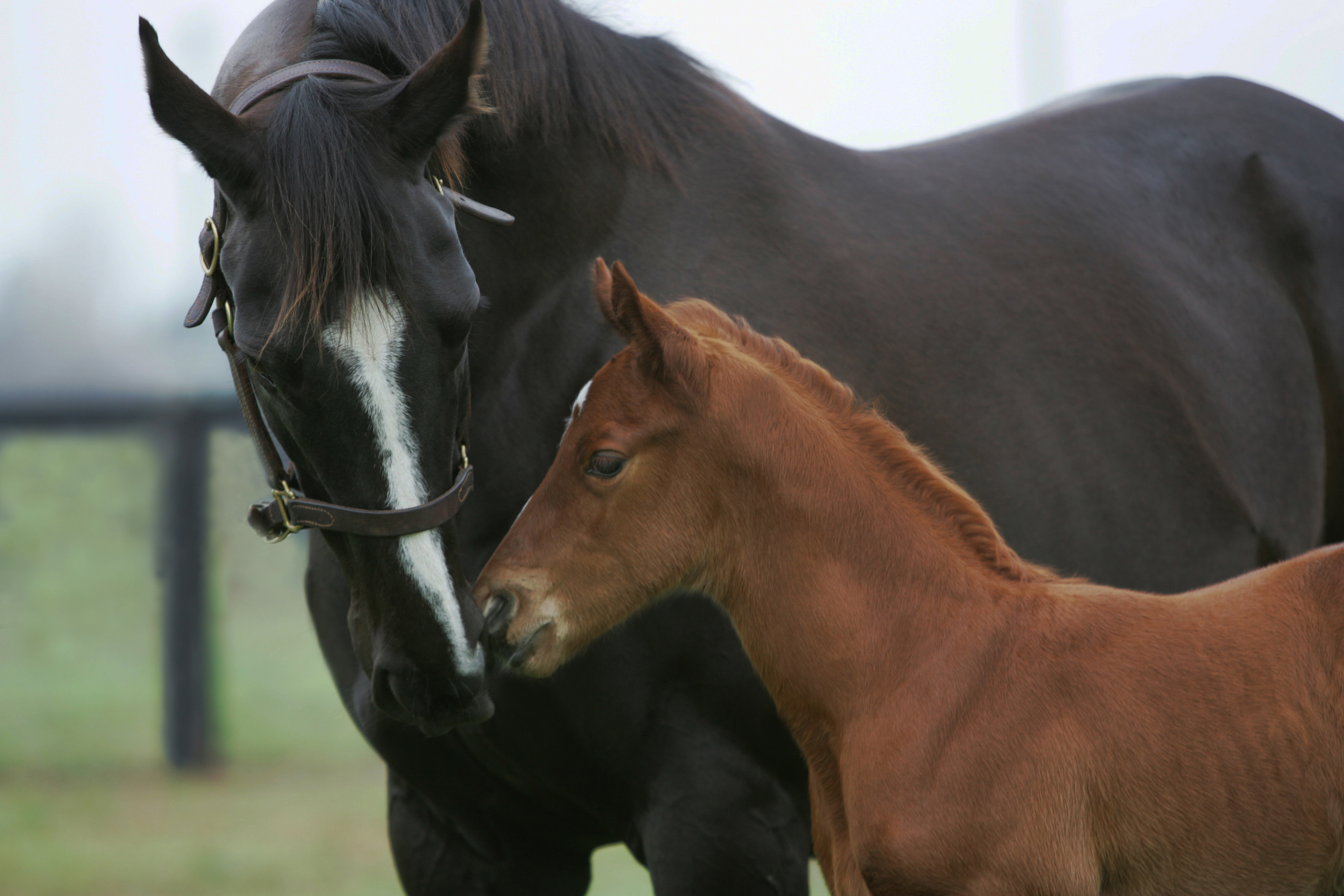 New season foals