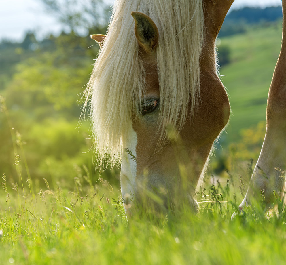Win A Year's supply of Horse Feed
