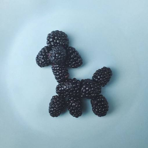 blackberry-dog