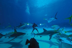A scuba driver stands on the ocean floor as fish and sharks swim around him.